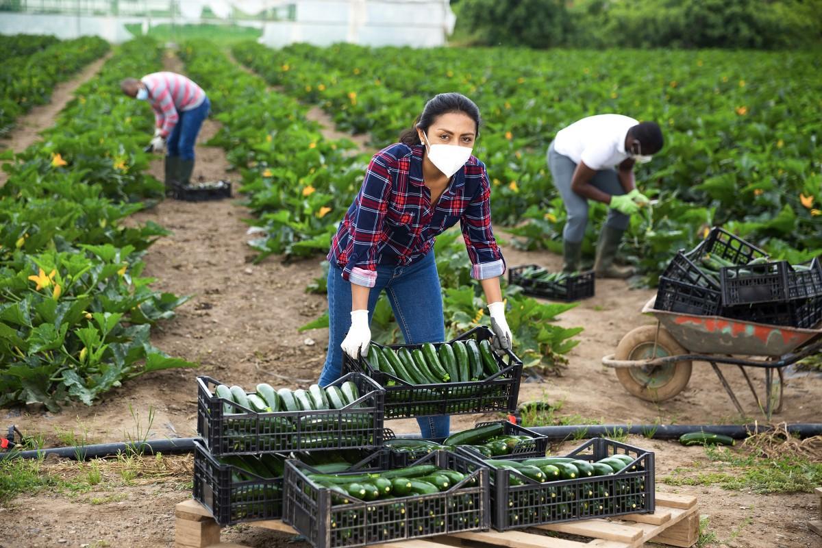 Une «aide prévention Covid» pour le secteur agricole, Social et RH