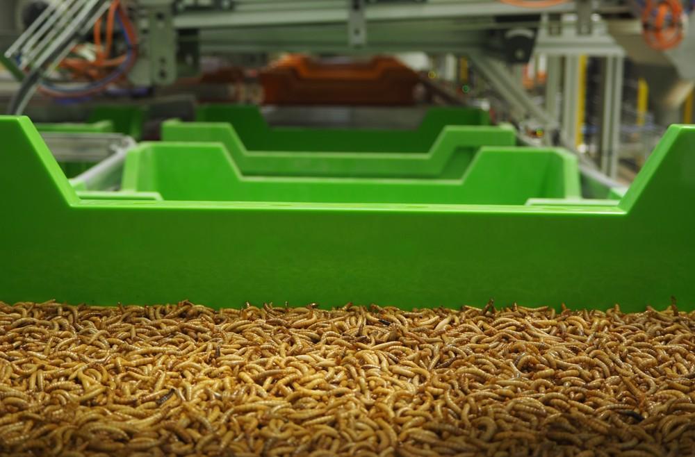 Ÿnsect, le spécialiste des protéines à base d'insectes, lève 316 millions, Financer la croissance